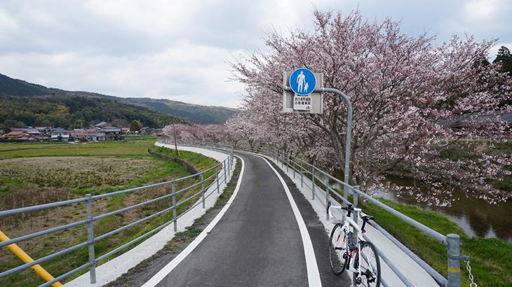 sakura_cycling_02